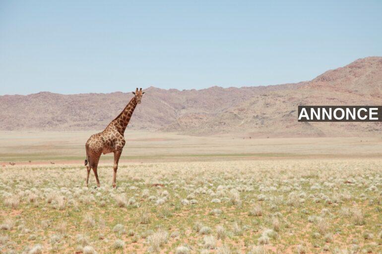 africa-arid-bushes-daylight-259411_1579708952694